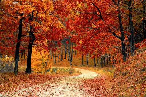 Autumn road with autumn leaves